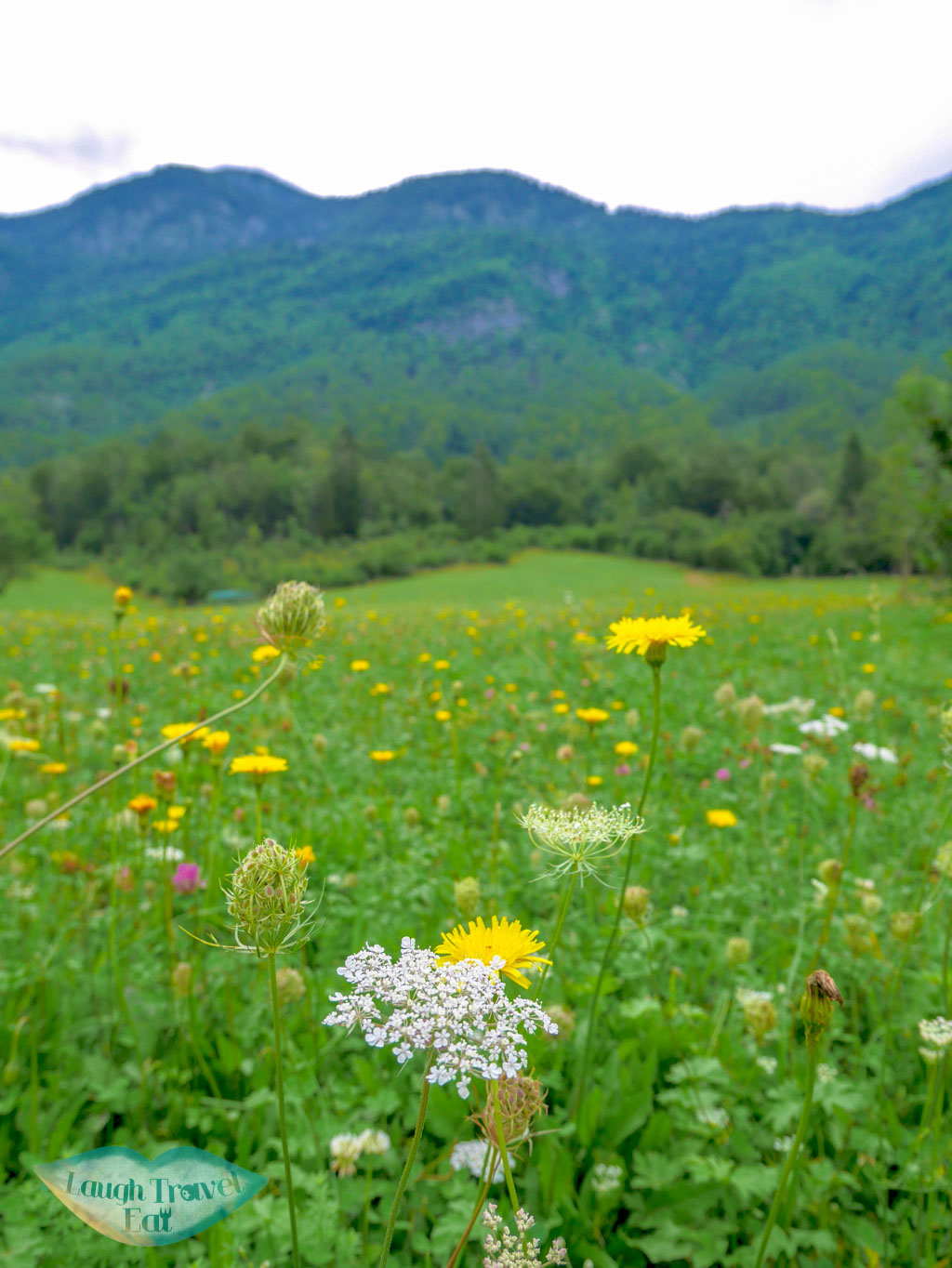 A huge meadow on the way to Okrepcevalnica Slap filled with wild flowers, Bohinj region, Slovenia | Laugh Travel Eat
