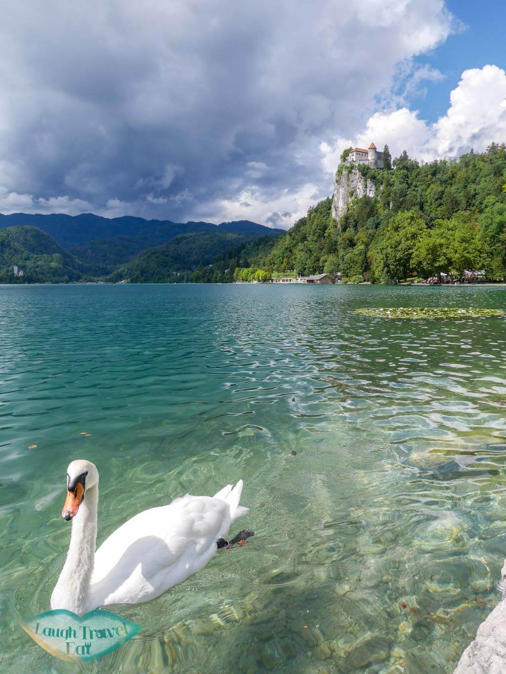 Swan swimming gracefully by the shores of Lake Bled with Bled Castle in the background | Laugh Travel Eat