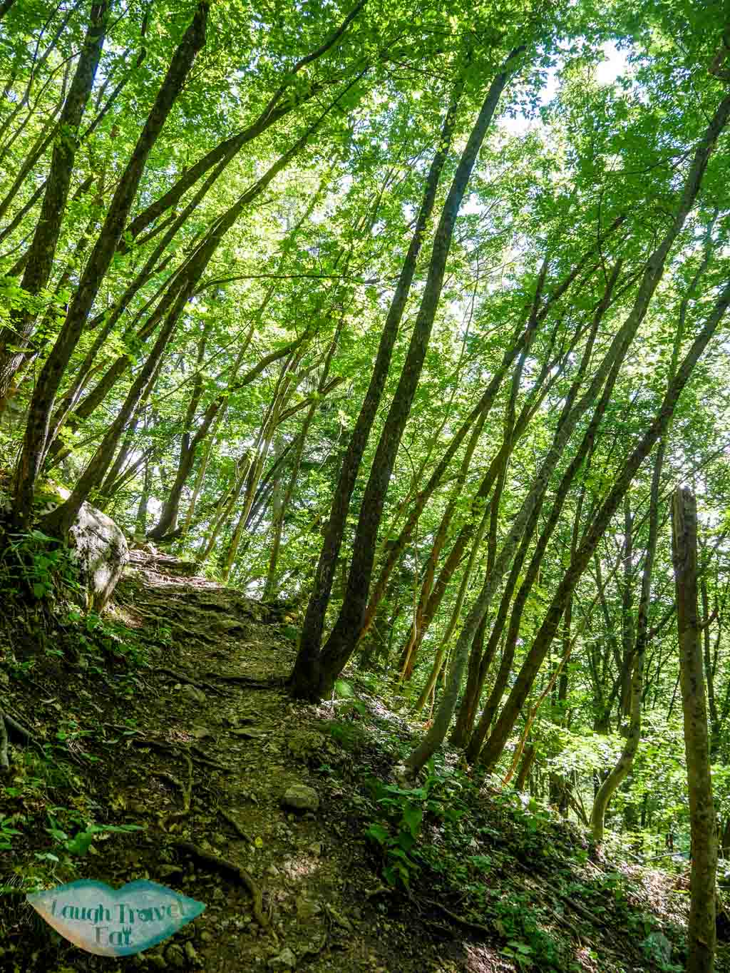 Shaded hiking path up to Ojstrica viewpoint in Bled, Slovenia   Laugh Travel Eat