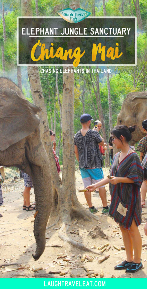 Elephant Jungle Sanctuary review Chiang Mai Thailand | Laugh Travel Eat