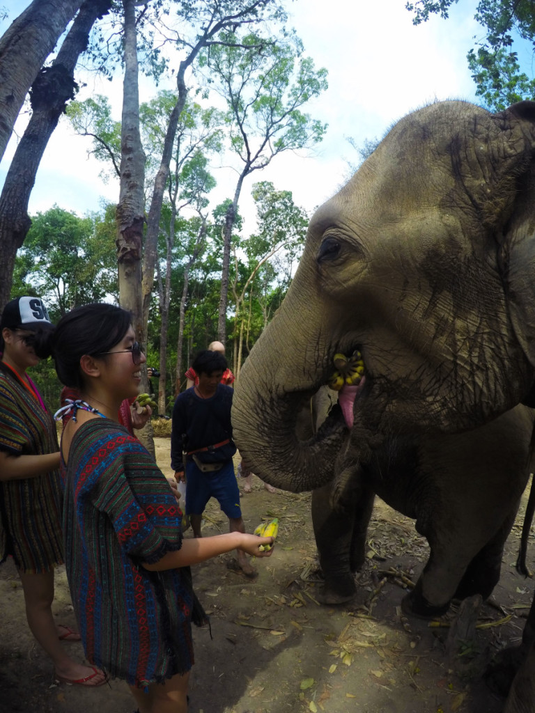 Elephant feeding and bonding time at Elephant Jungle Santuary | Laugh Travel Eat