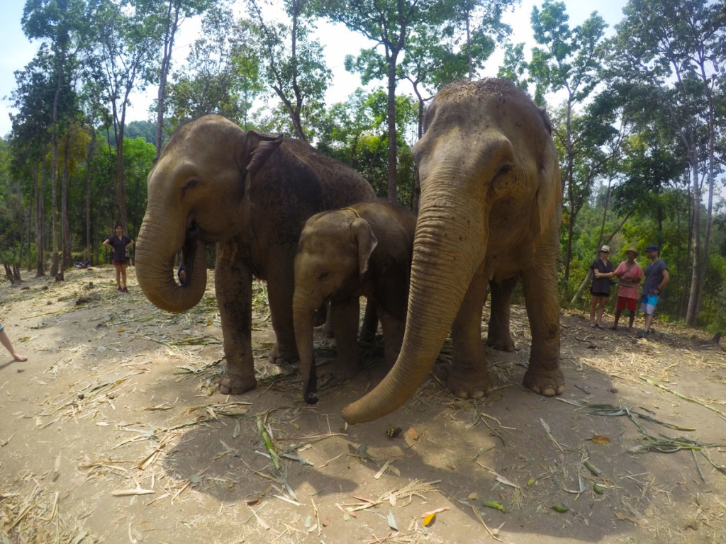 Family of elephants at the Elephant Jungle Santuary | Laugh Travel Eat