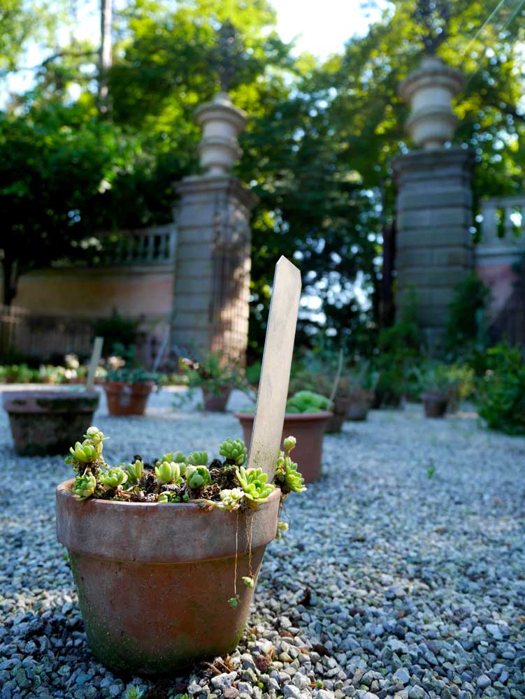 Cute little potted plants, Padua Botanical Garden, Padua, Veneto, Italy | Laugh Travel Eat