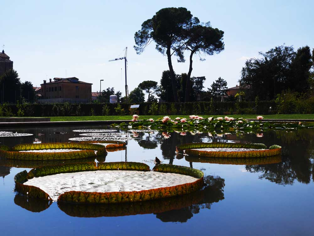 the gorgeous lily pads in the ppol outside the greenhouse of Padua Botanical Garden, Padua, Veneto, Italy | Laugh Travel Eat