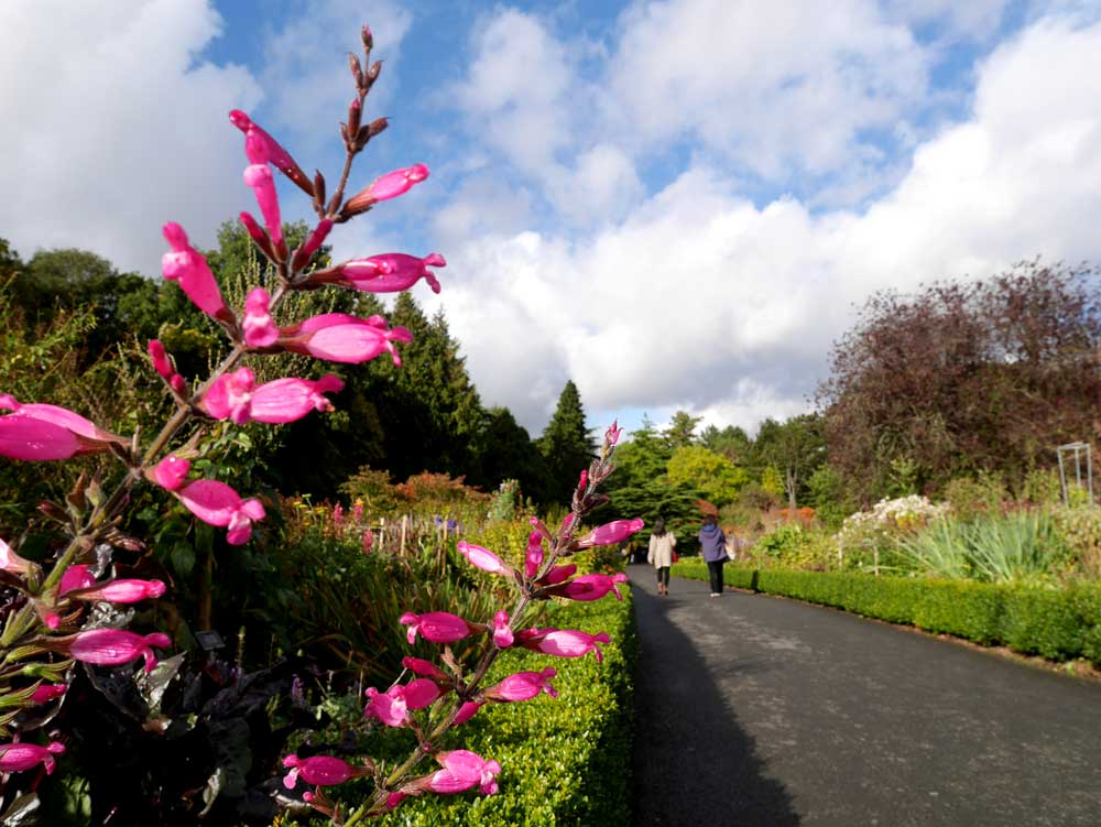Dublin National Botanic Garden, Dublin, Ireland | Laugh Travel Eat