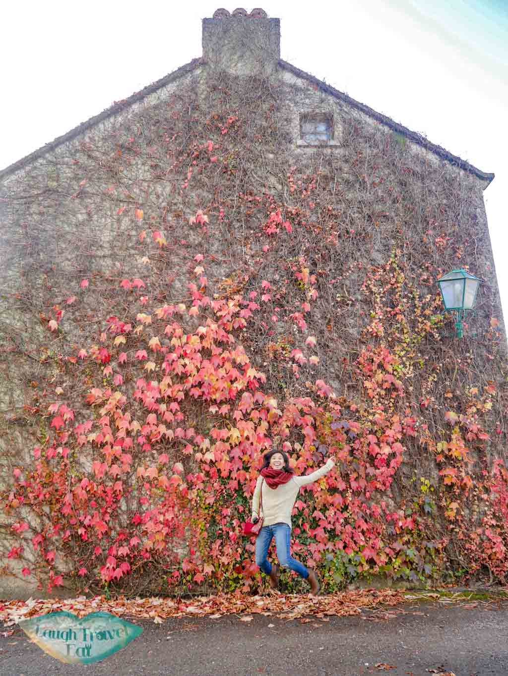 red-leave-wall-Bunratty-castle-rail-tour-dublin-Ireland-Laugh-Travel-Eat