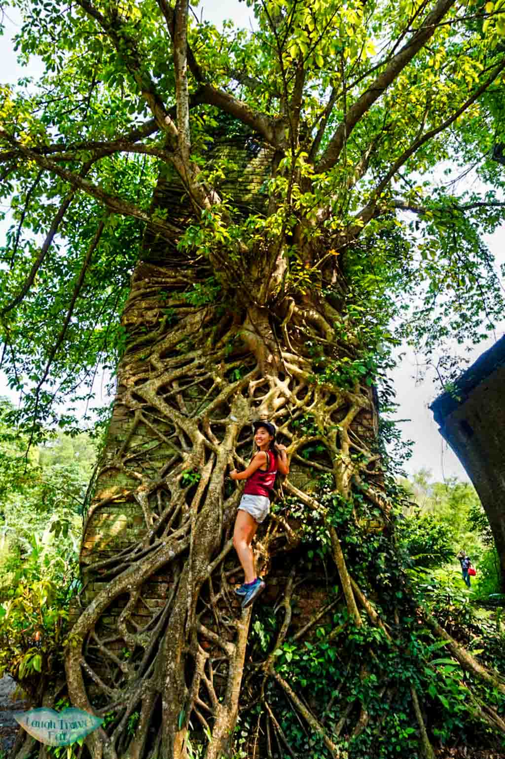 Climbing up half way up a tree on one of the Longteng Bridge ruin in Taichung Taiwan | Laugh Travel Eat