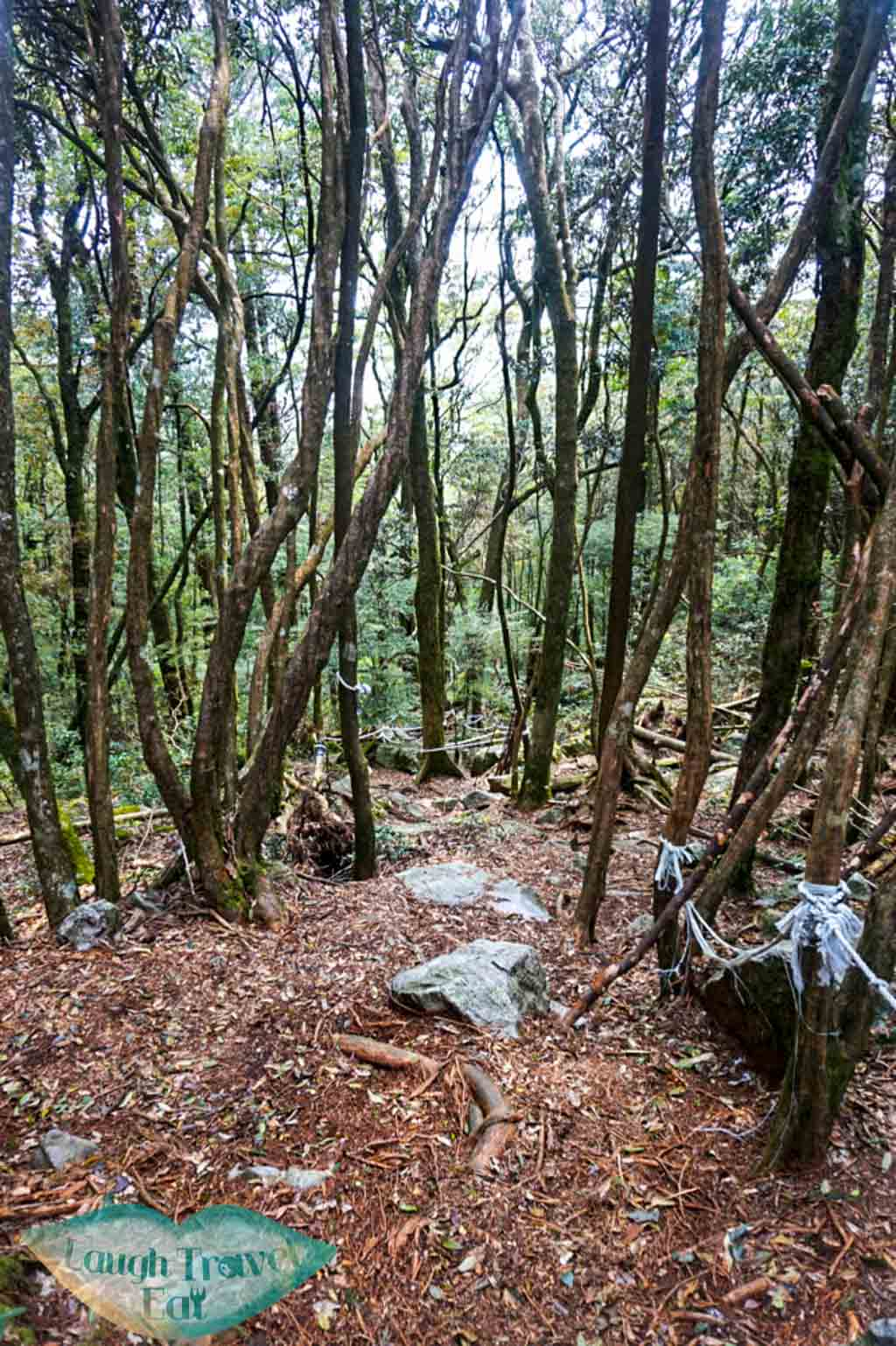 Pathway down from Yuan Zui Mountain in Dasyueshan National Forest Recreational Area, Taichung - Laugh Travel Eat