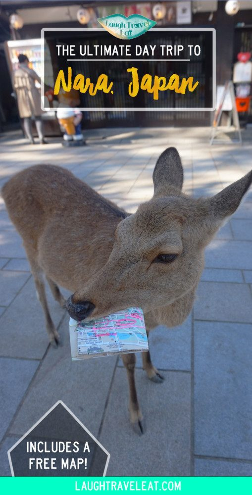 If you are in Kansai region, a day trip to Nara to see the deer park and temples are a must. Here is an itinerary for food, temples, deers. #Japan #Nara #DayTrip