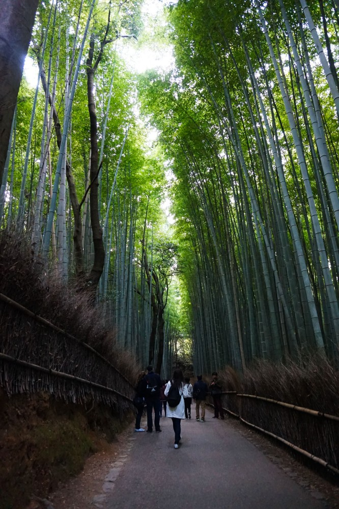 Bamboo Forest at Arashiyama, Kyoto, Japan | Laugh Travel Eat