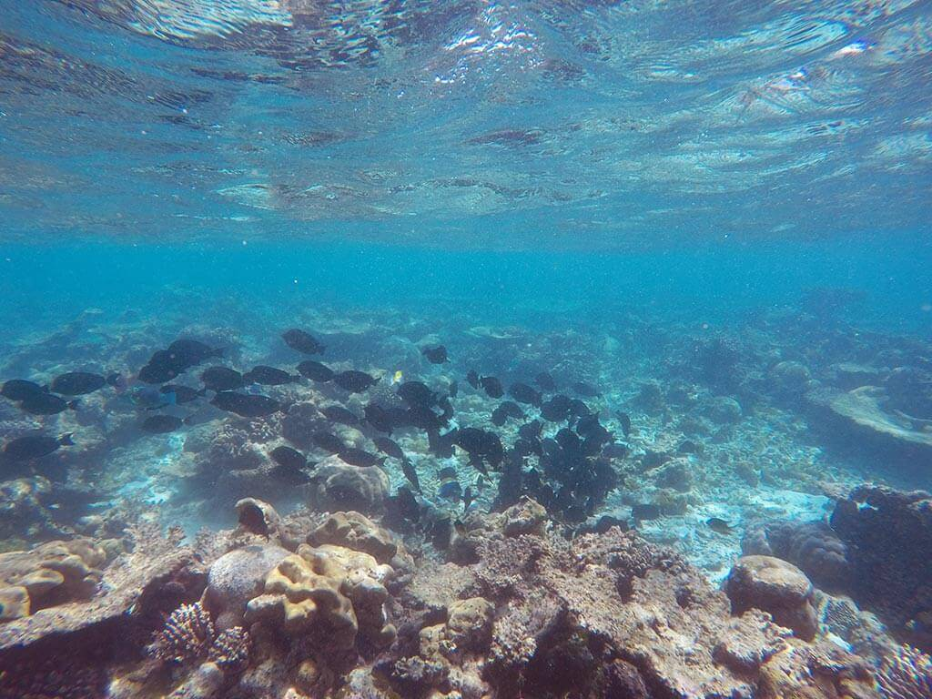 Picnic Island snorkel near Gaafaru, Maldives | Laugh Travel Eat