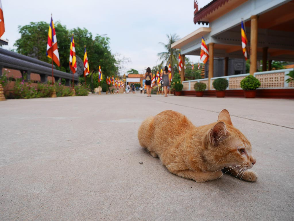 Stray cats at Wat Preah Prom Rath, Siem Reap, Cambodia | Laugh Travel Eat