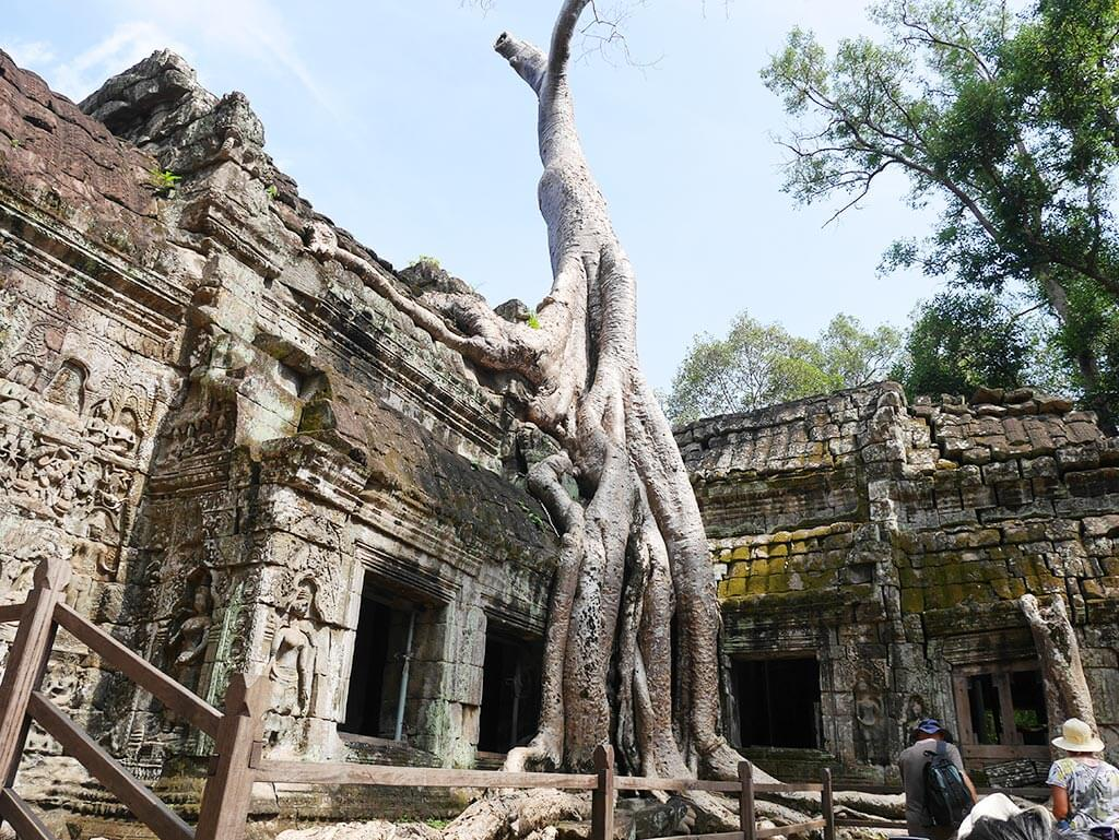 ta prohm classic shot with tree angkor thom, Cambodia | Laugh Travel Eat
