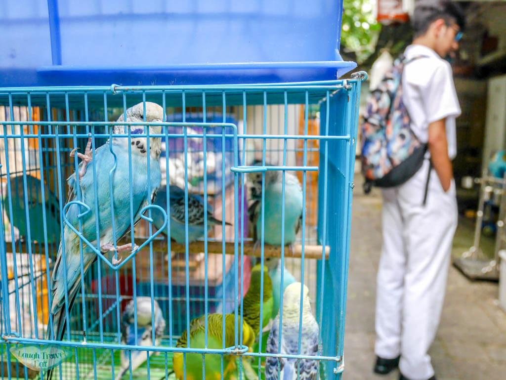 blue parrot birds marketMongkok Hong Kong - Laugh Travel Eat