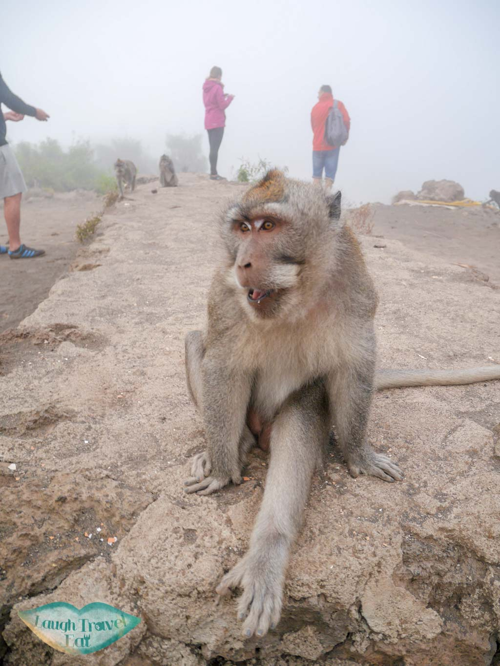 monkey on top of Mount Batur bali indonesia - laugh travel eat