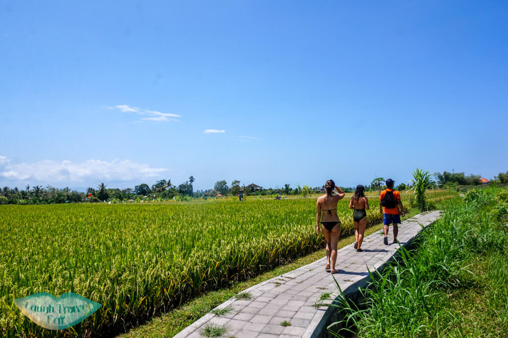 rice paddies at the end of hidden canyon bali indnoesia - Laugh Travel Eat