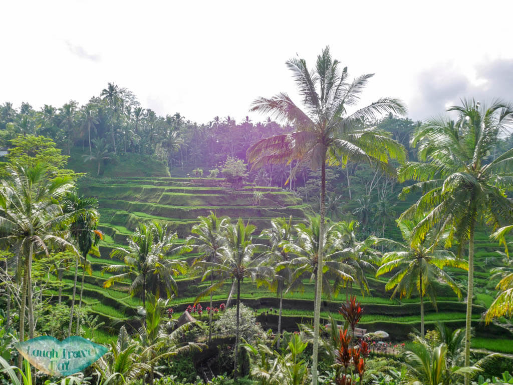 tegalalang rice paddies ubud bali indnoesia - Laugh Travel Eat