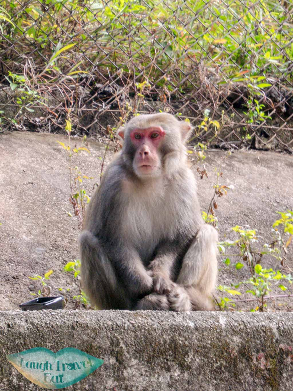 monkey at shing mun reservoir hong kong- laugh travel eat