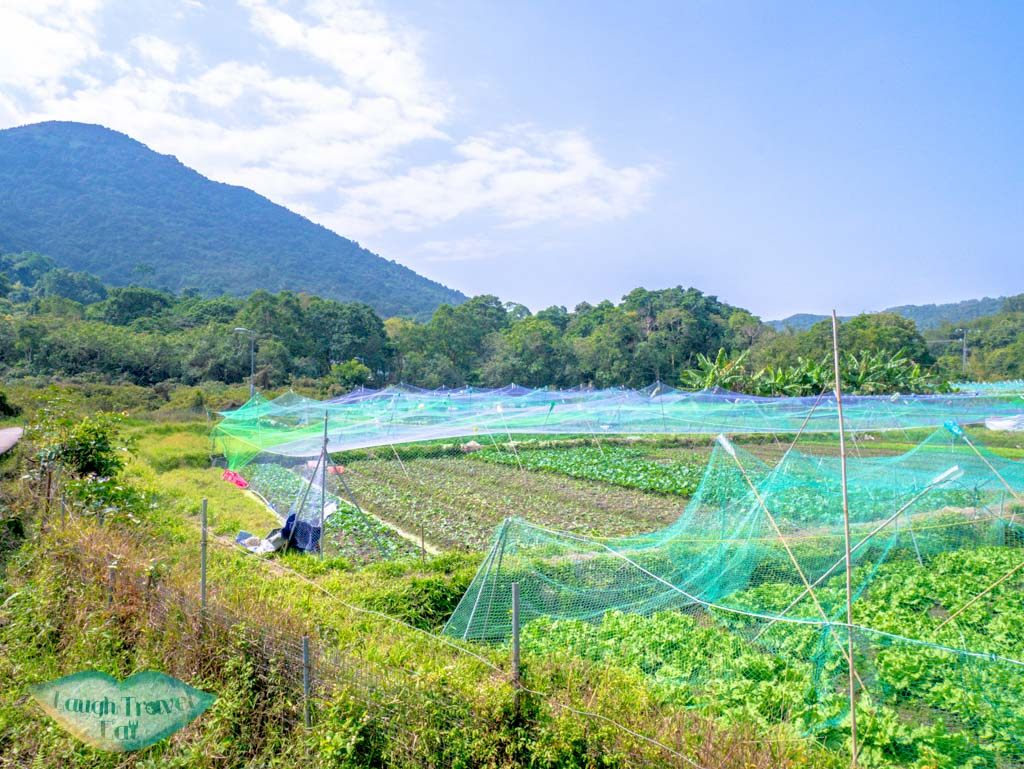 vegetable field at pak sha o sai kung hong kong- laugh travel eat