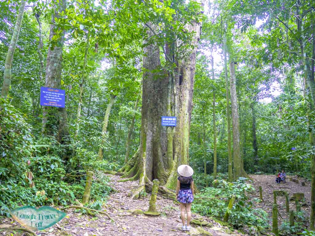 thousand-years-old-tree-at-cuc-phuong-national-park-ninh-binh-vietnam-Laugh-Travel-Eat