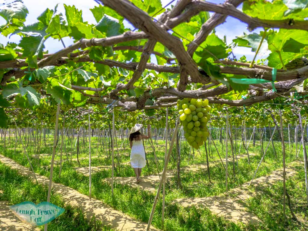 vineyard-at-Ba-Moi-winery-ninh-thuan-vietnam-laugh-travel-eat