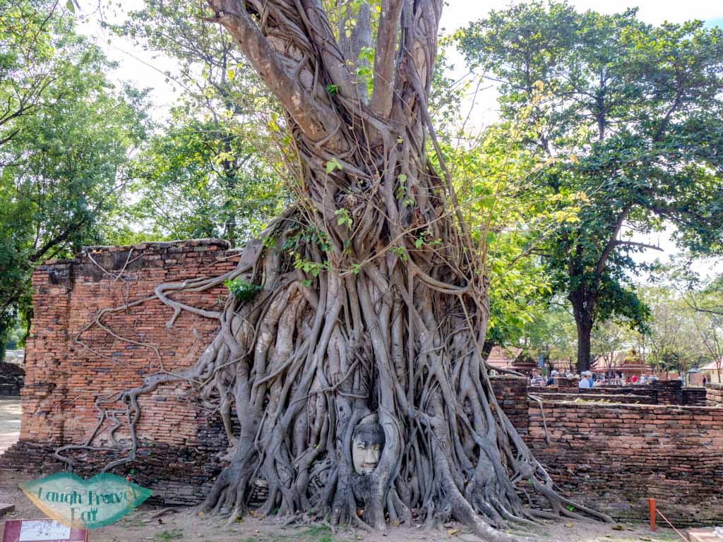 buddha-head-in-tree-at-Wat-Mahathat-Ayutthaya-thailand-laugh-travel-eat