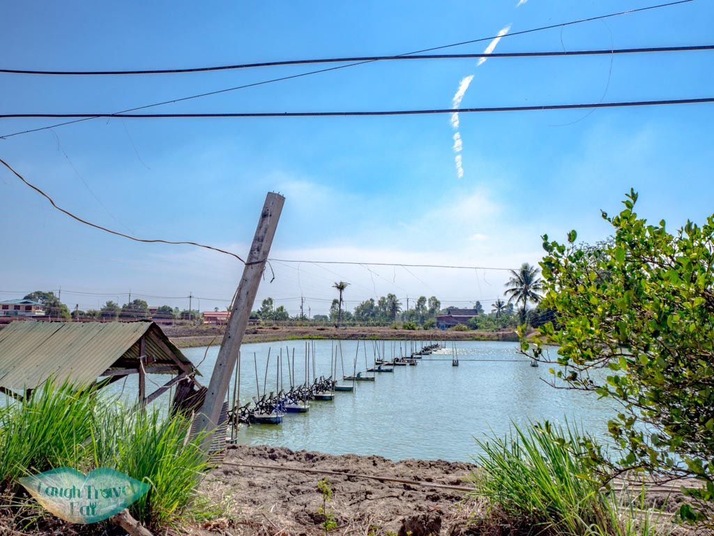 shrimp-farm-suphan-buri-thailand-laugh-travel-eat