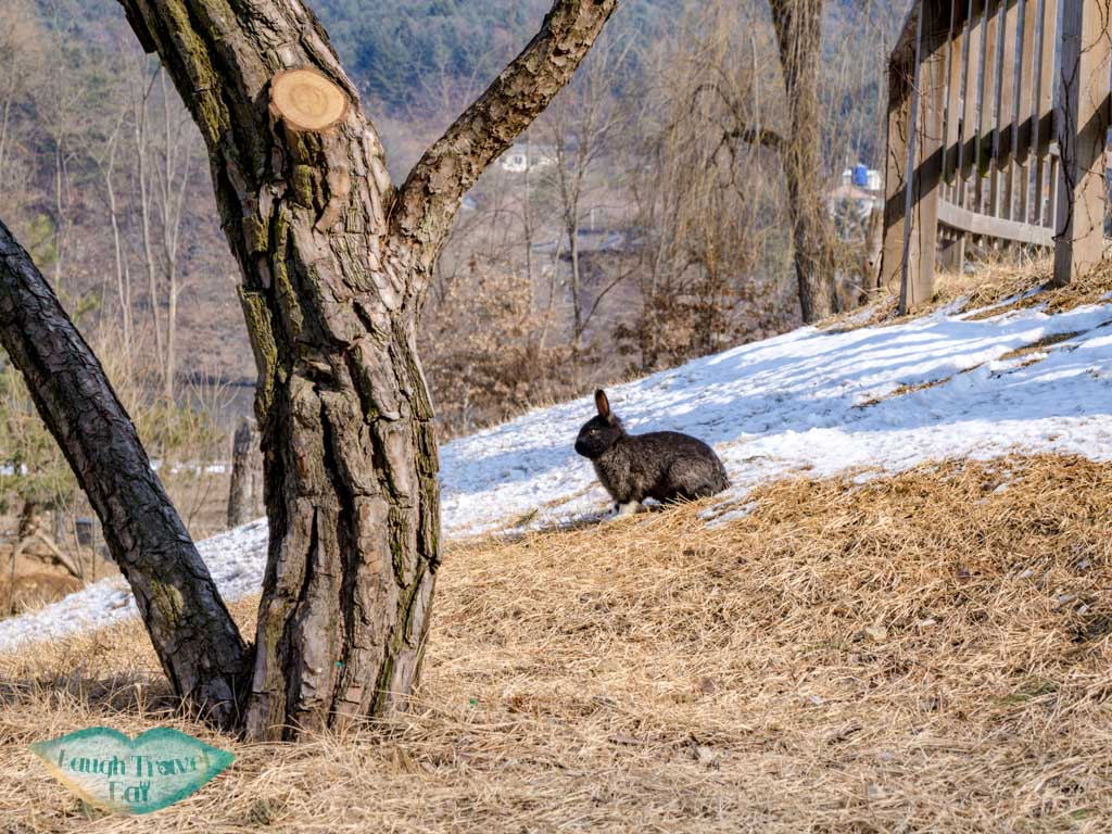 rabbit-nami-island-gangwon-south-korea-laugh-travel-eat