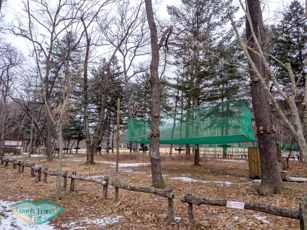 treeline-adventure-nami-island-gangwon-south-korea-laugh-travel-eat