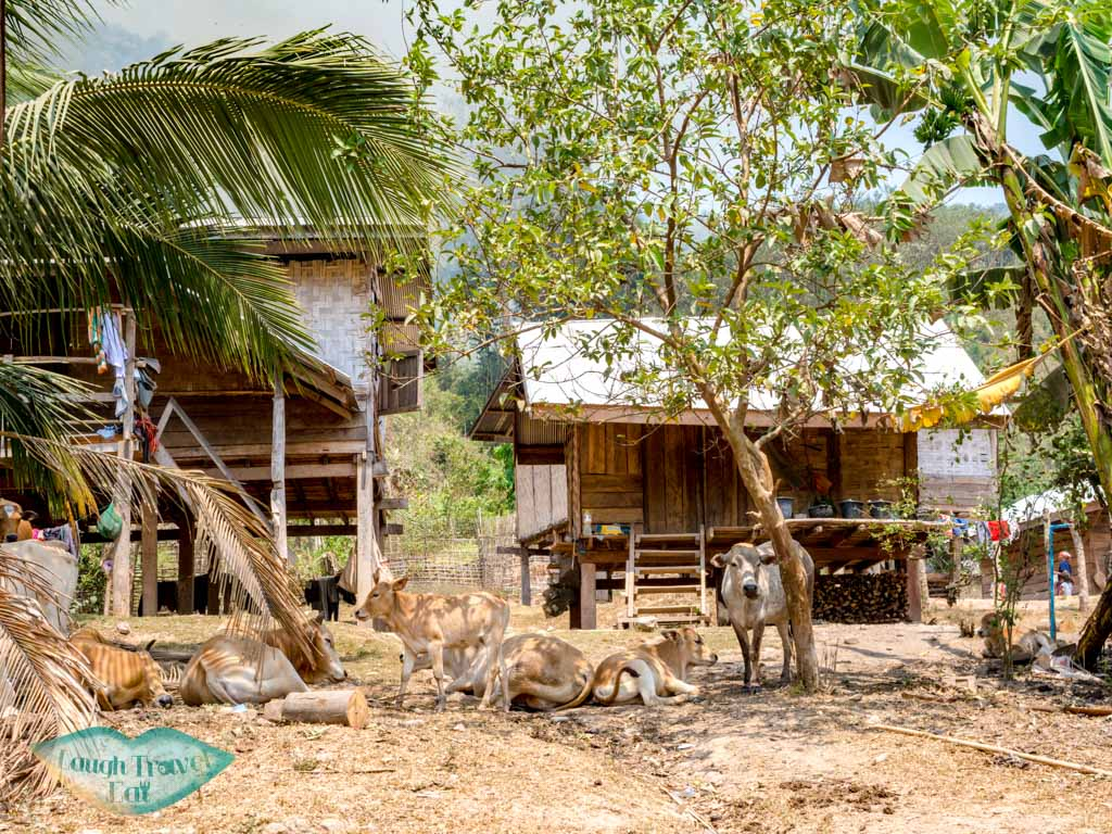 Nalan-Nuea-village-nam-ha-national-park-luang-namtha-laos-laugh-travel-eat-2