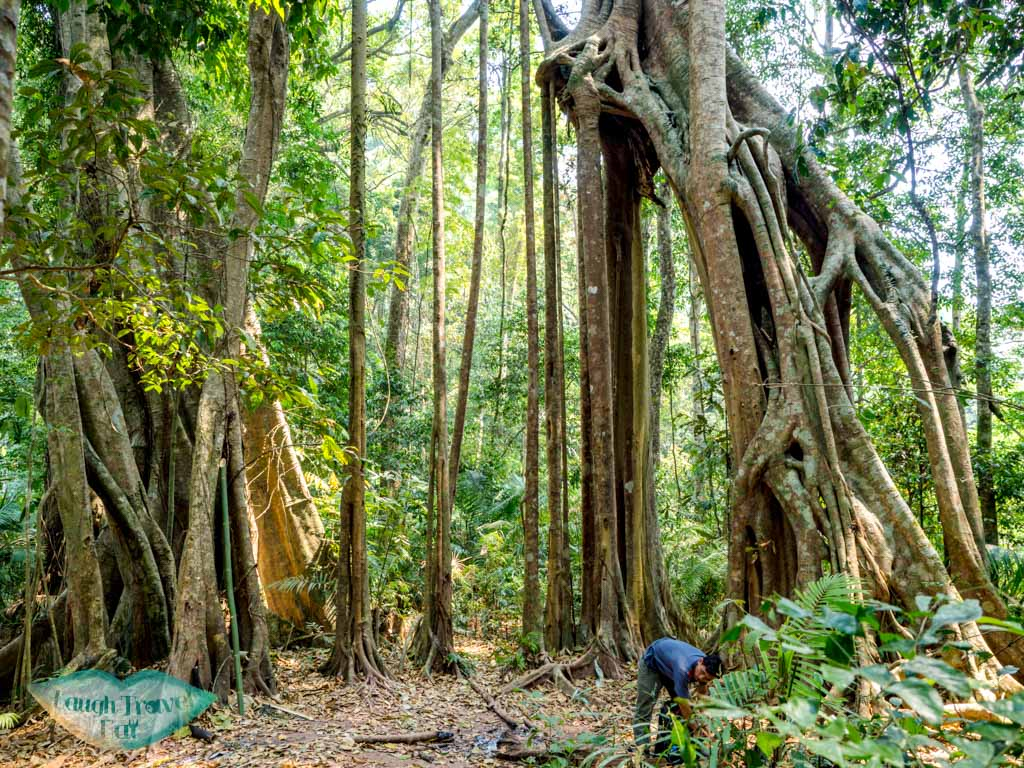 lunch-tree-clearing-nam-ha-national-park-luang-namtha-laos-laugh-travel-eat