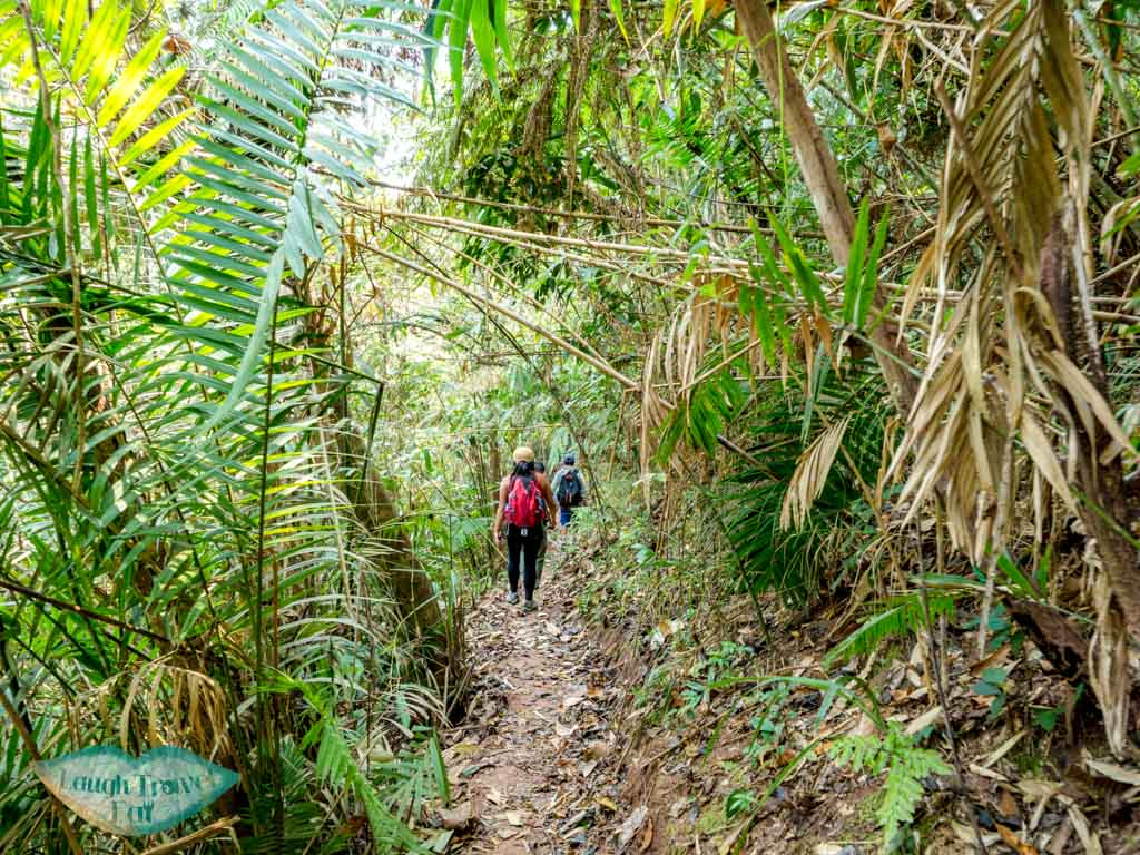 pre-lunch-landscape-trek-in-nam-ha-national-park-luang-namtha-laos-laugh-travel-eat-2