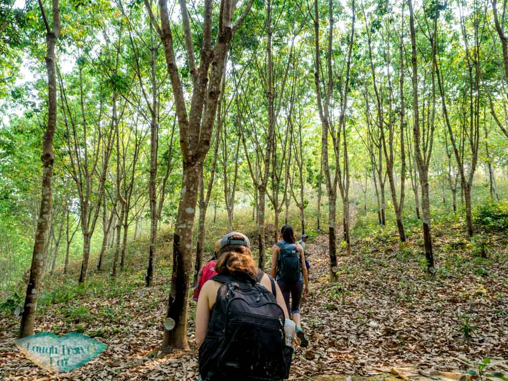 rubber-tree-forests-trek-in-nam-ha-national-park-luang-namtha-laos-laugh-travel-eat