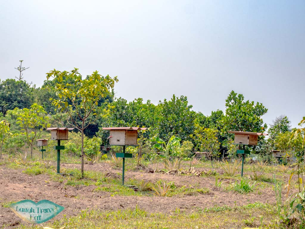 bees-keeping-Phouphetpheoukham-Garden-Vieng-Phou-Kha-laos-laugh-travel-eat