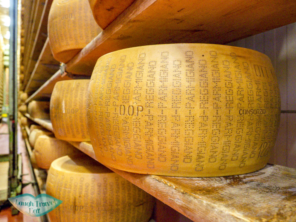 close up of cheese wheel 4 madonna modena italy - laugh travel eat