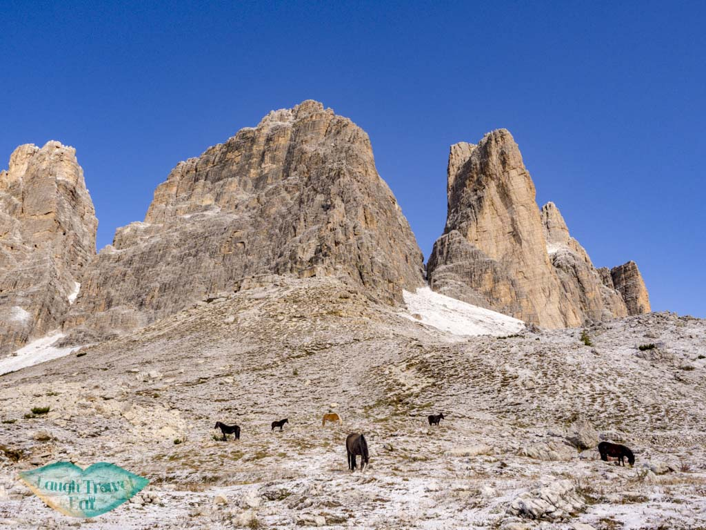 horses along tre cime di lavorado dolomites italy - laugh travel eat