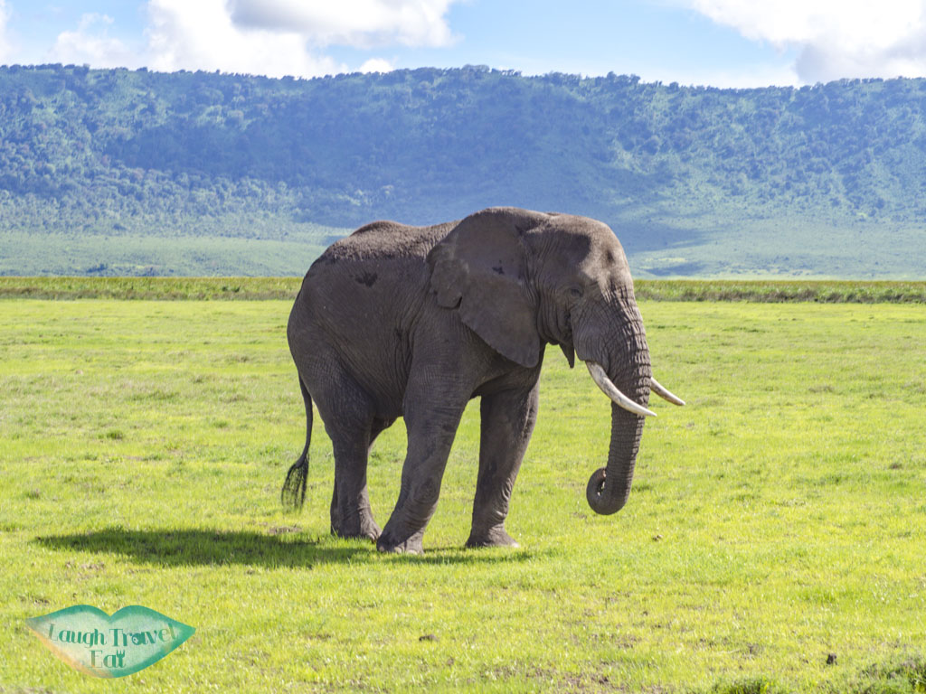 elephant ngorogoron national park tanzania africa - laugh travel eat
