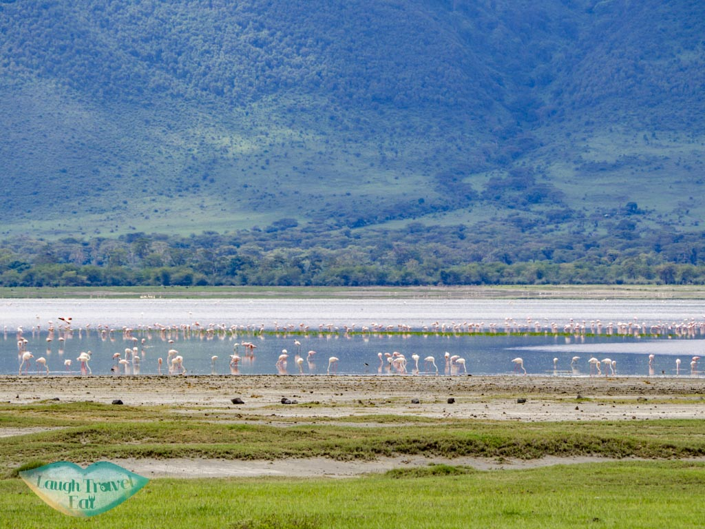 flamingoes ngorogoron national park tanzania africa - laugh travel eat