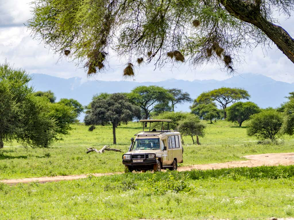 jeep in tarangeri national park tanzania africa - laugh travel eat