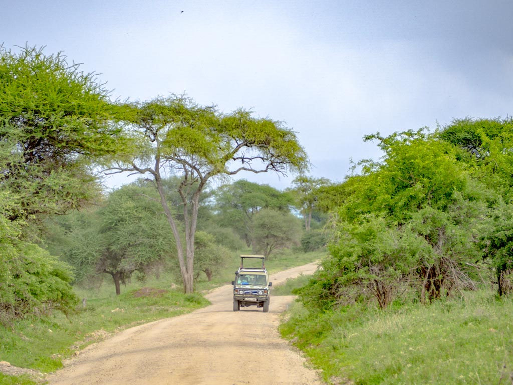 jeep tarangeri national park tanzania africa - laugh travel eat