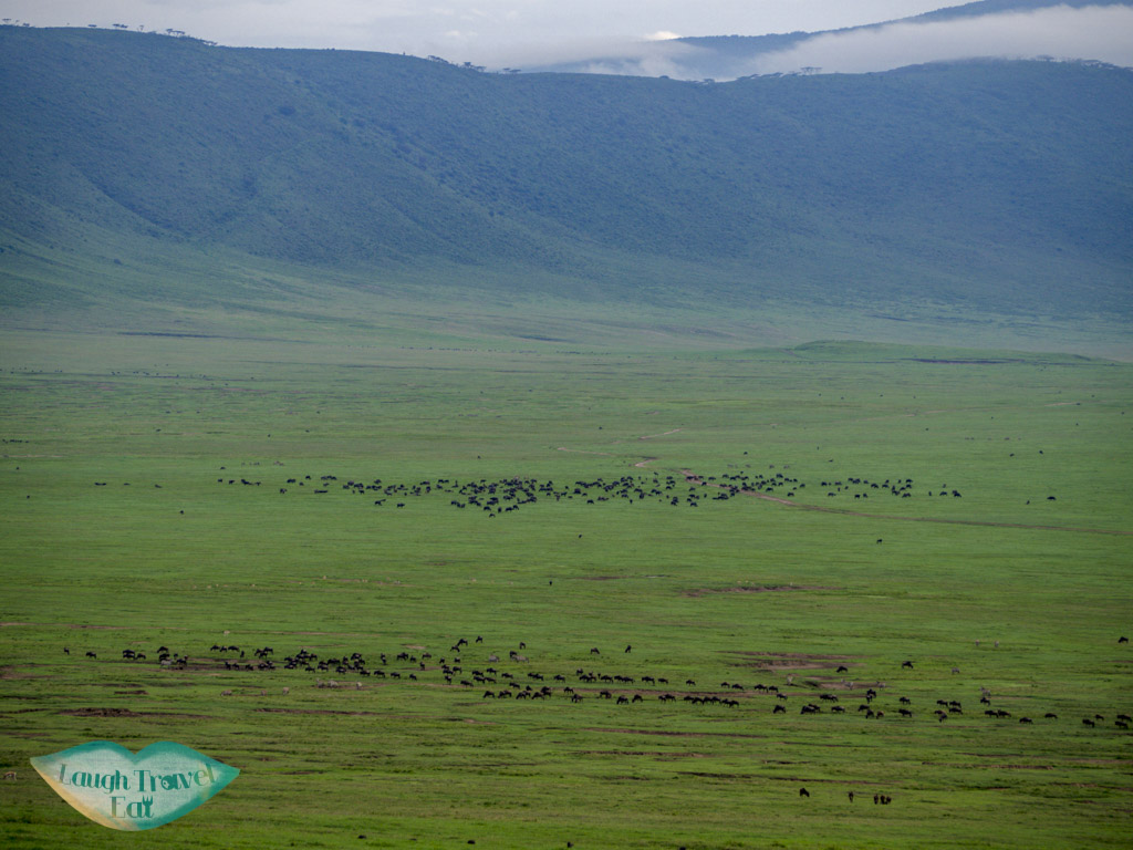 wilderbeest herd in ngorogoron national park tanzania africa - laugh travel eat