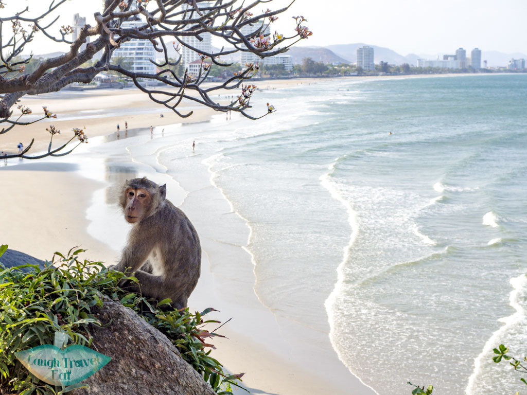 monkey at chopstick hill hua hin thailand - laugh travel eat