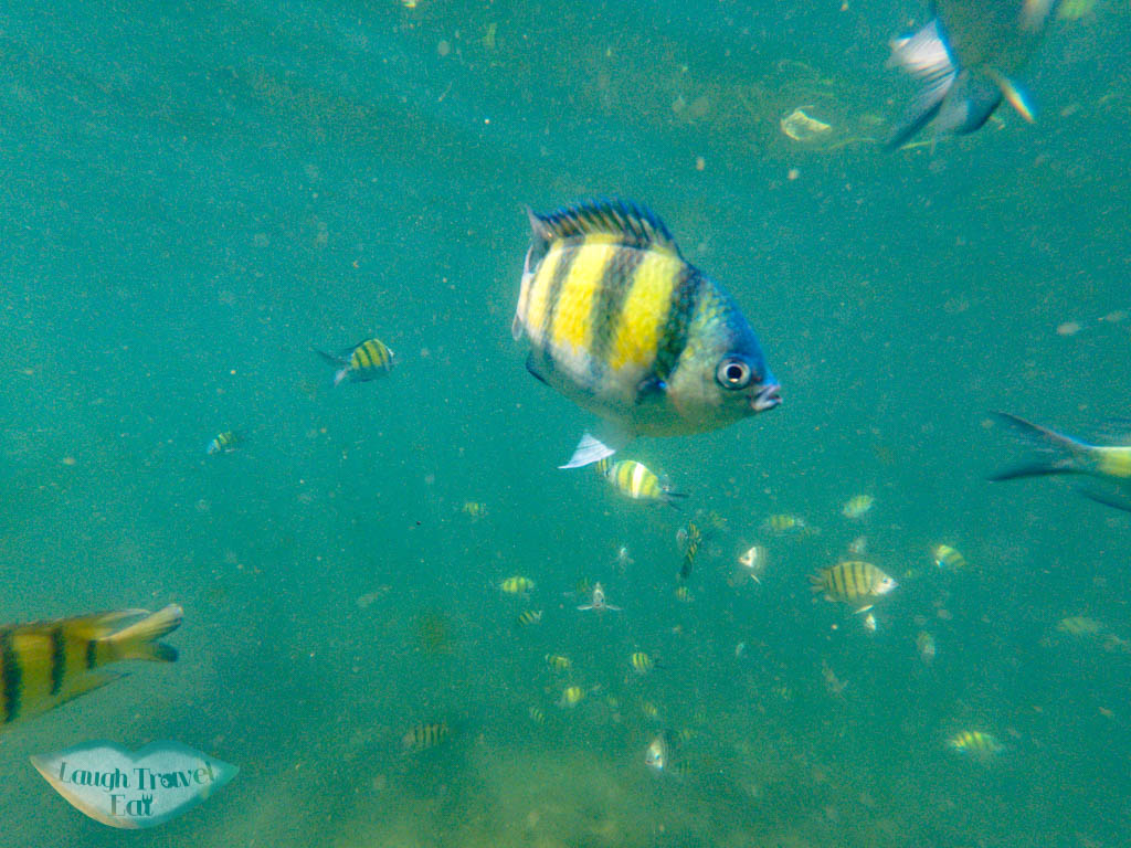 snorkeling 4 island ao nang krabi thailand - laugh travel eat