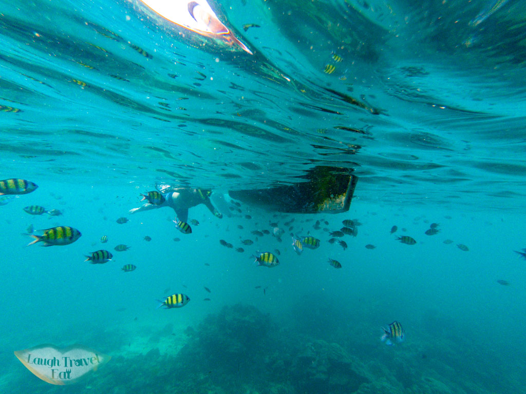 snorkeling by viking cave koh phi phi thailand - laugh travel eat-2