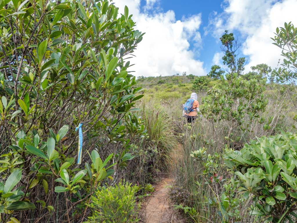 from maclehose stage 2 trail to kam kui shek teng trail sai kung hong kong - laugh travel eat-2