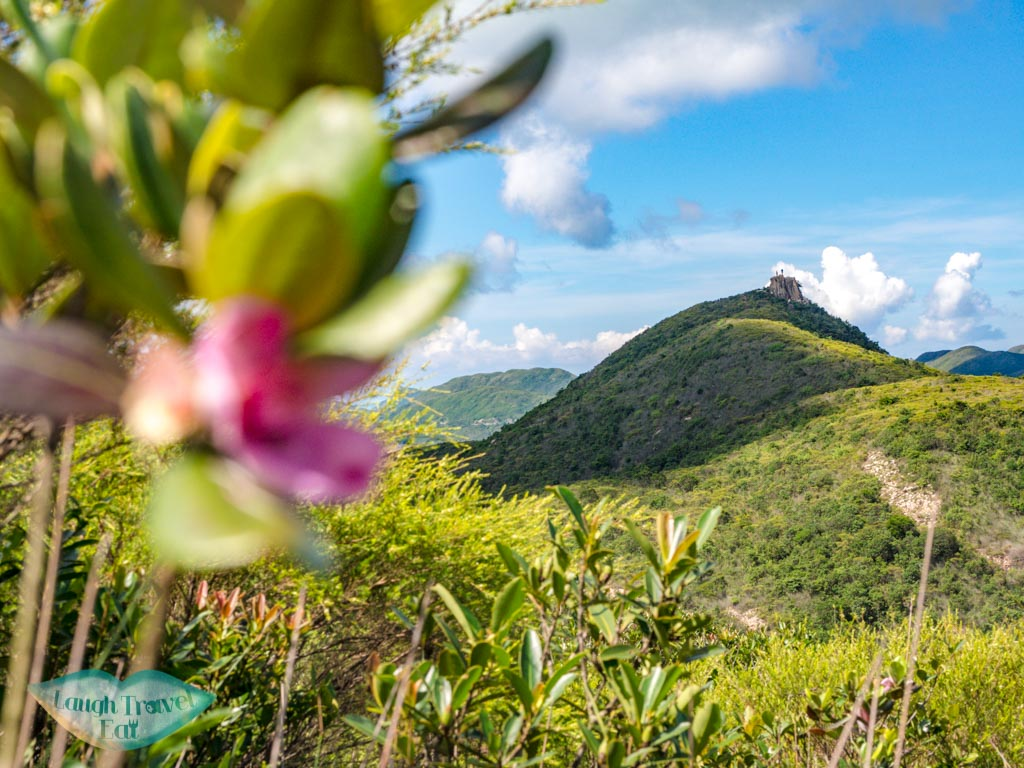 view of kam kui shek teng with flower sai kung hong kong - laugh travel eat