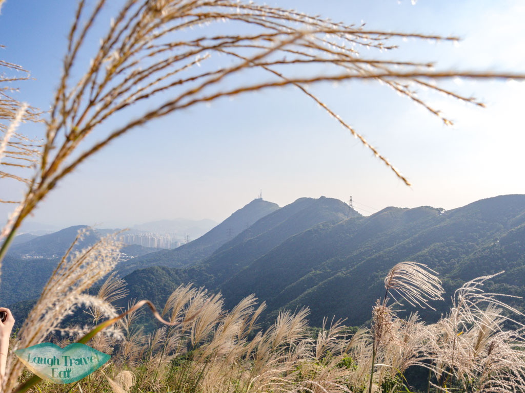 silver grass kowloon peak range from tung yeung shan kowloon hong kong - laugh travel eat