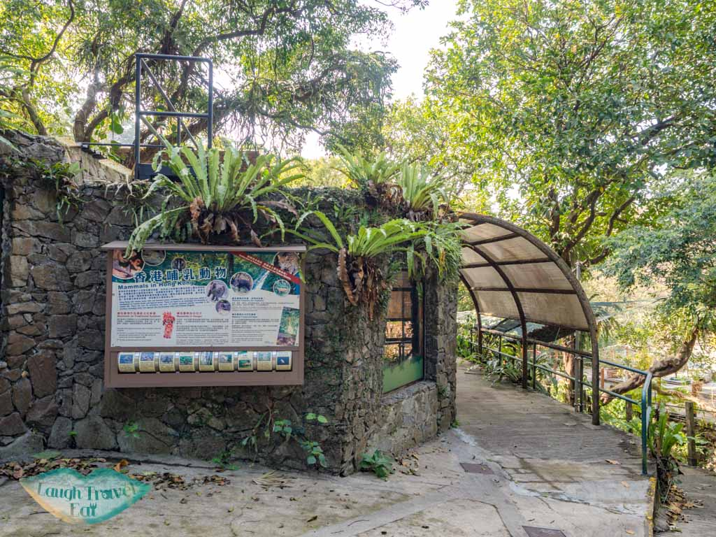 Native Mammal Display lower nature reserve kadoorie farm tai po hong kong - laugh travel eat