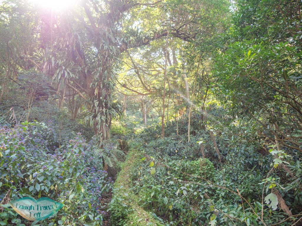 fern walk lower nature reserve kadoorie farm tai po hong kong - laugh travel eat