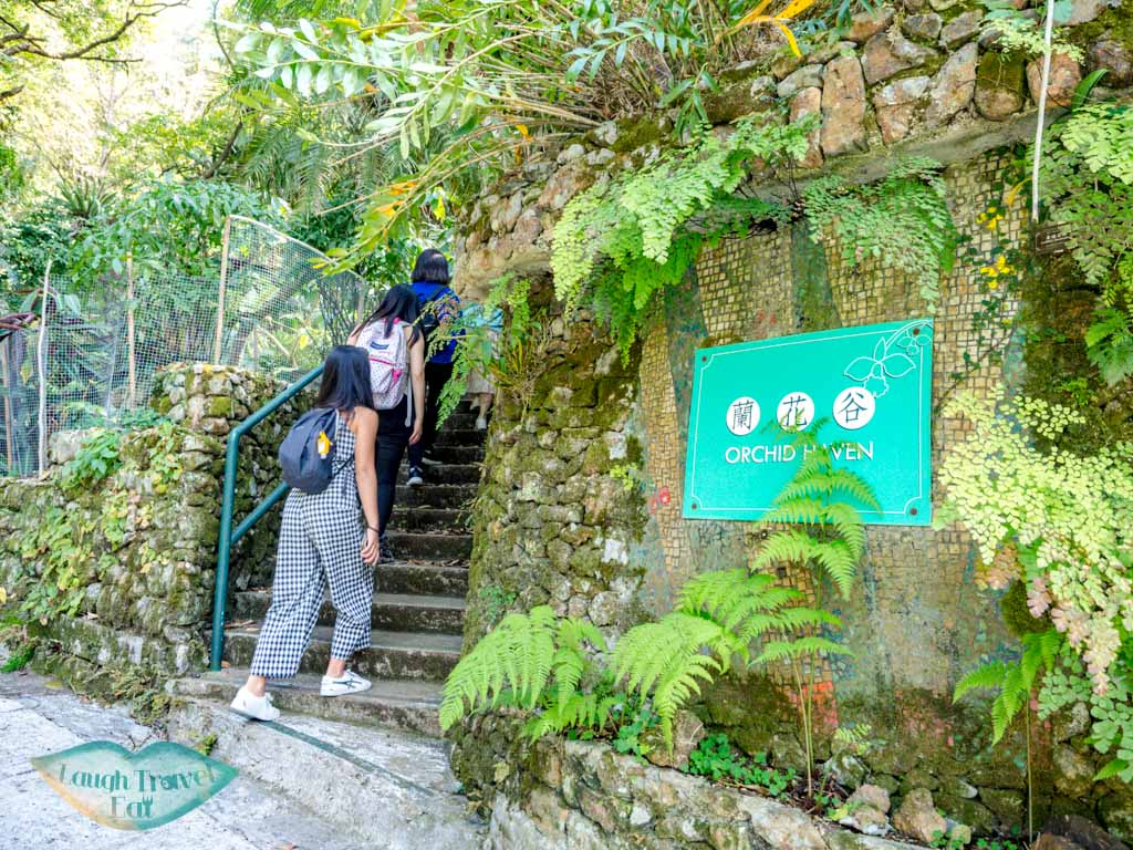 orchid haven kadoorie farm tai po hong kong - laugh travel eat